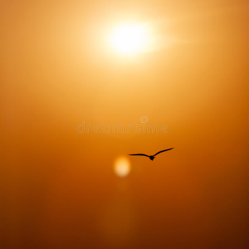 Bird silhouetted flying in sunset royalty free stock images
