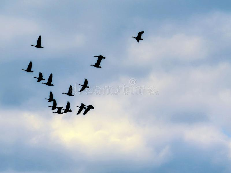 Bird Silhouettes Flying Together In The Cloudy Blue Sky stock images