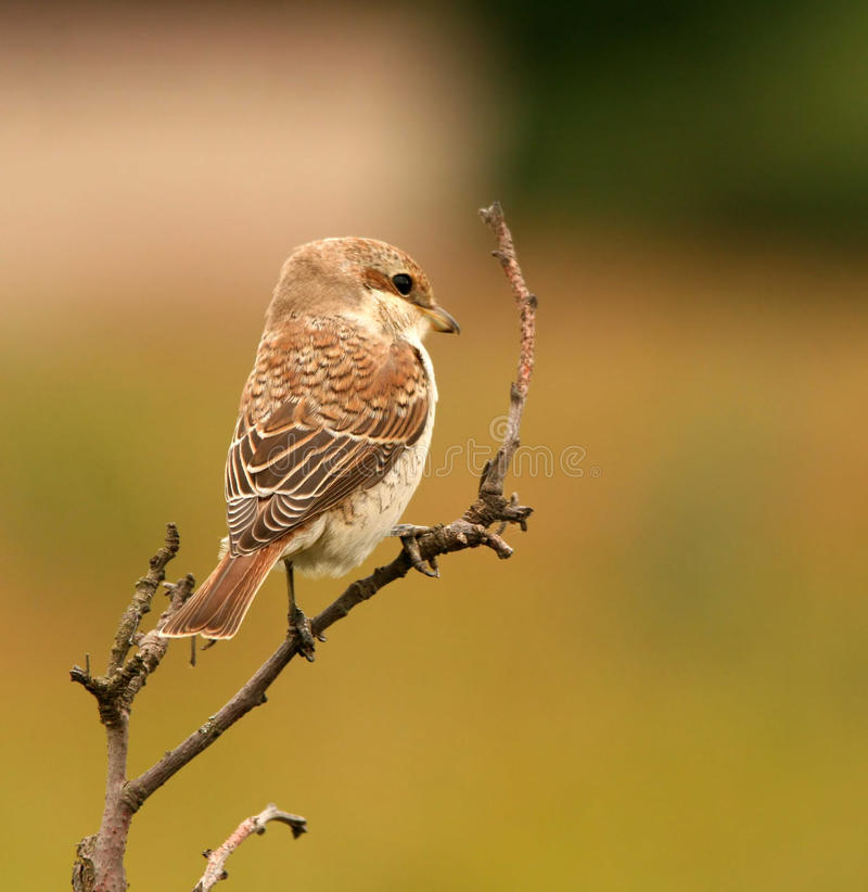 The bird sits on a branch royalty free stock images