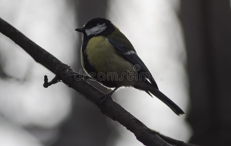 Bird sitting on a branch stock photo