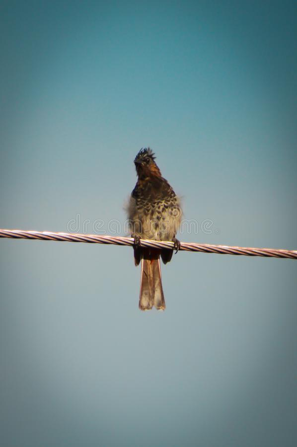 A Bird sitting in an electric wire. royalty free stock photos