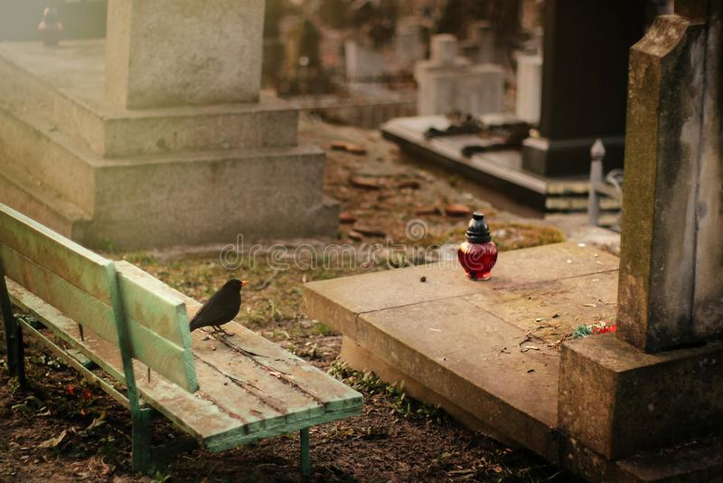 Bird sitting at old stone tomb on grave on ancient cemetery royalty free stock photos
