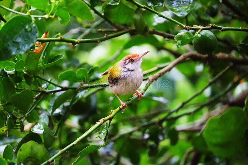 Bird sitting on a tree branch stock image