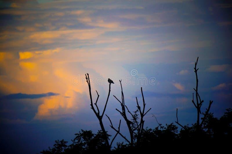 Bird sitting on the tree with orangish cloudy background royalty free stock photos