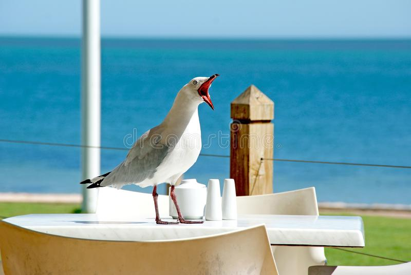 Bird, Sky, Beak, Sea royalty free stock image