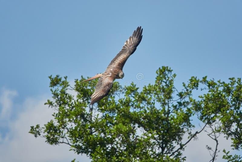 Bird, Sky, Fauna, Accipitriformes Free Public Domain Cc0 Image