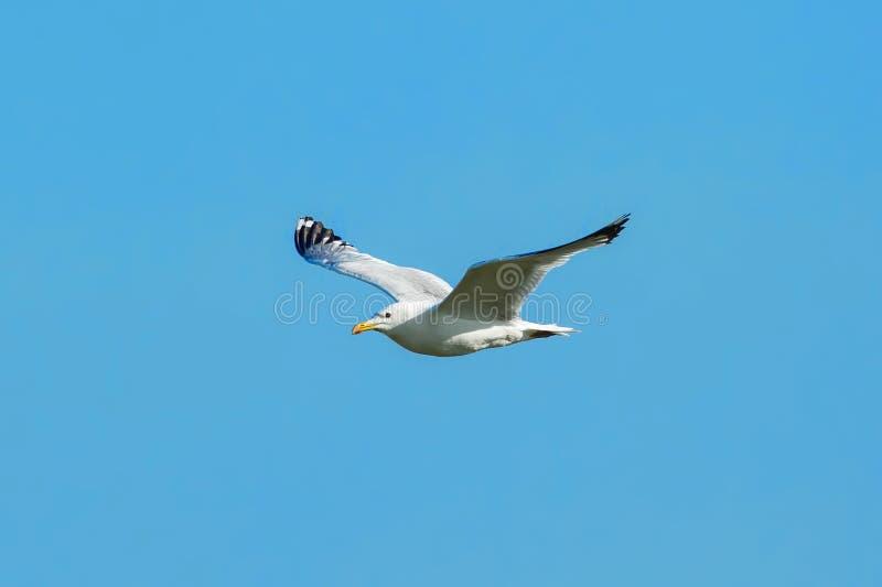 Bird, Sky, Fauna, Seabird Free Public Domain Cc0 Image