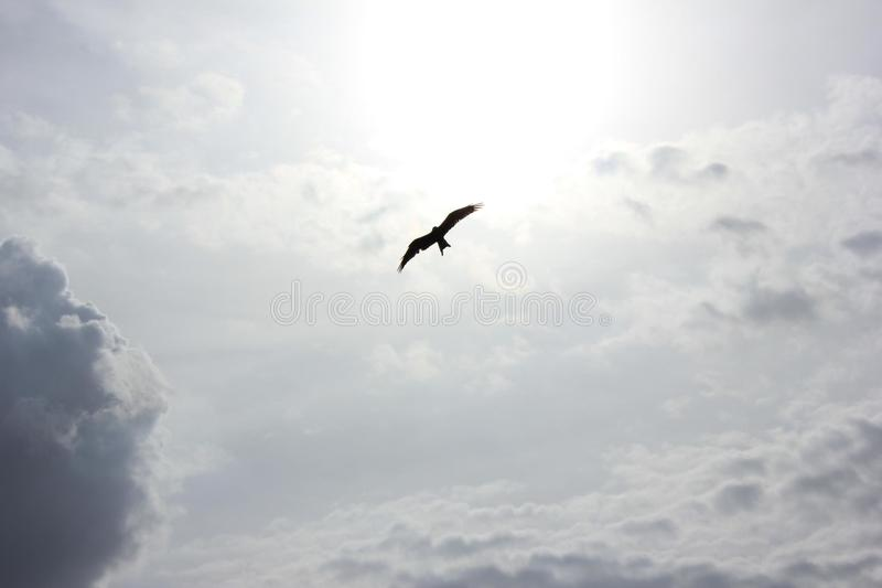 Bird At The Sky Under Heavy Clouds During Daytime Free Public Domain Cc0 Image