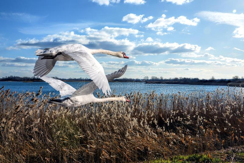 Bird, Sky, Water, Seabird Free Public Domain Cc0 Image
