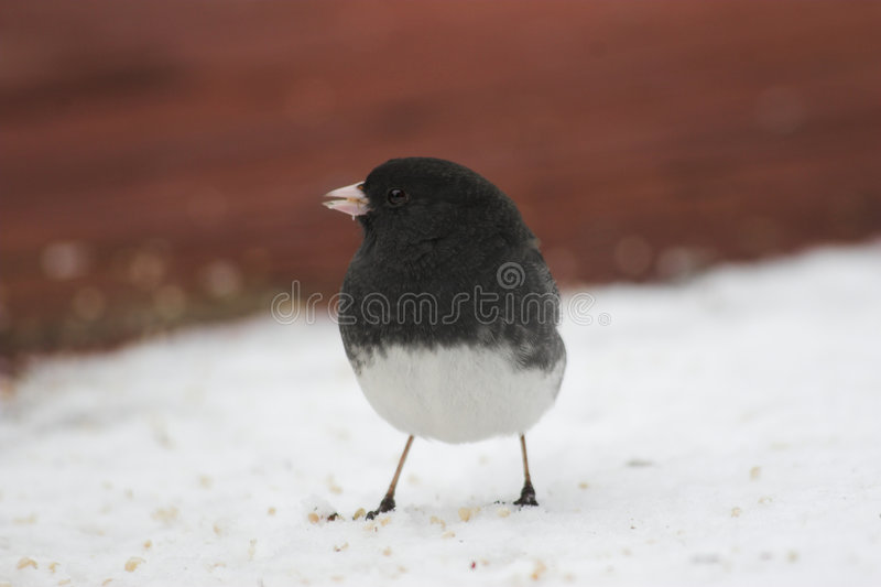 Bird & snow royalty free stock image