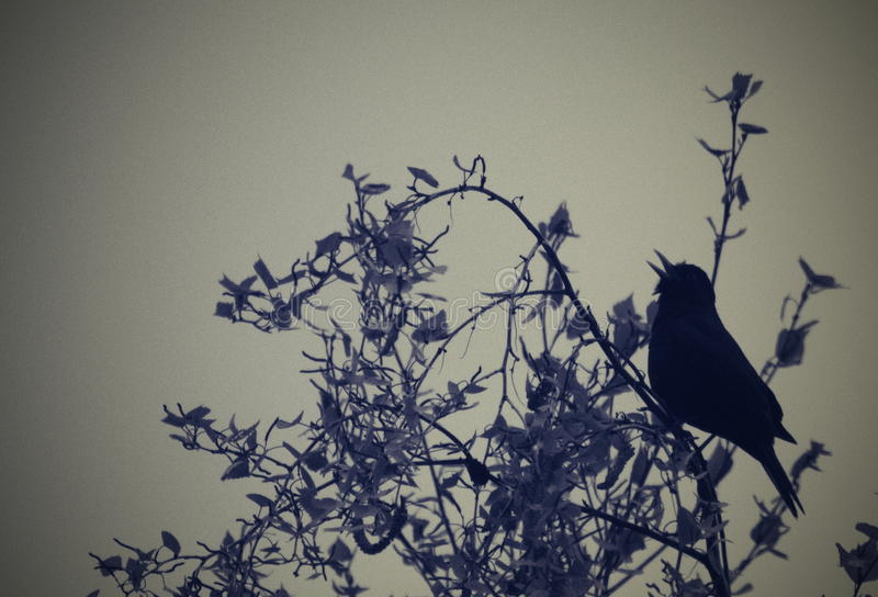 Bird. Song vocals of canto serenity royalty free stock images