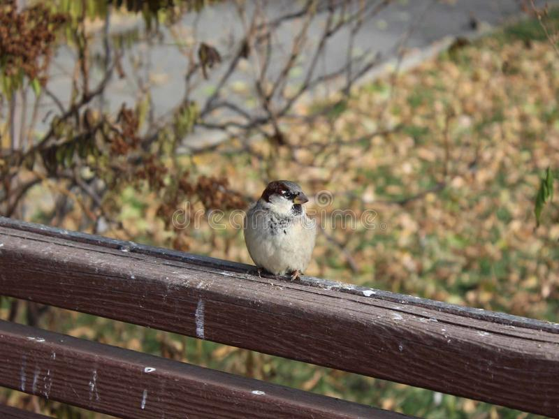 Bird sparrow stock images