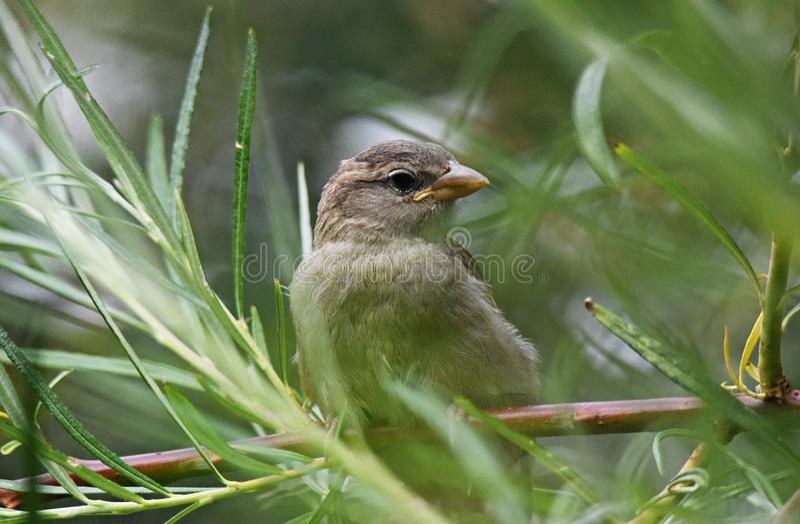 Bird, Sparrow, Fauna, Beak Free Public Domain Cc0 Image