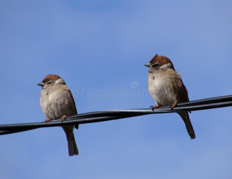 Bird sparrow stock image
