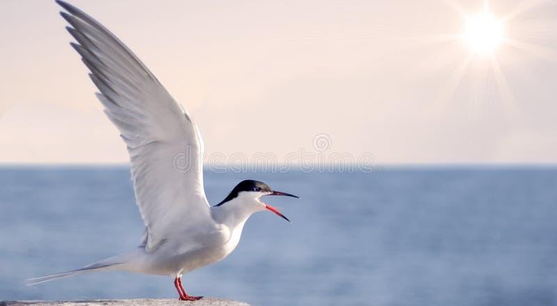 Bird spread wings scream stock photography