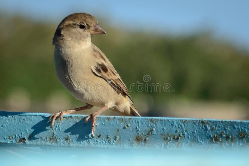 A bird stand up With pride stock photo