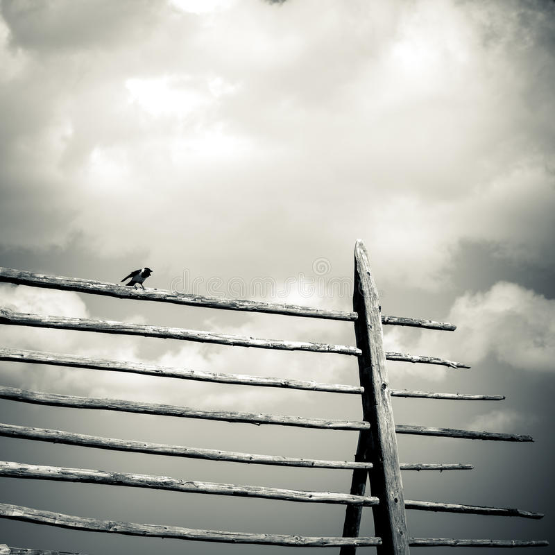 Bird. Stay on wood frame stock images