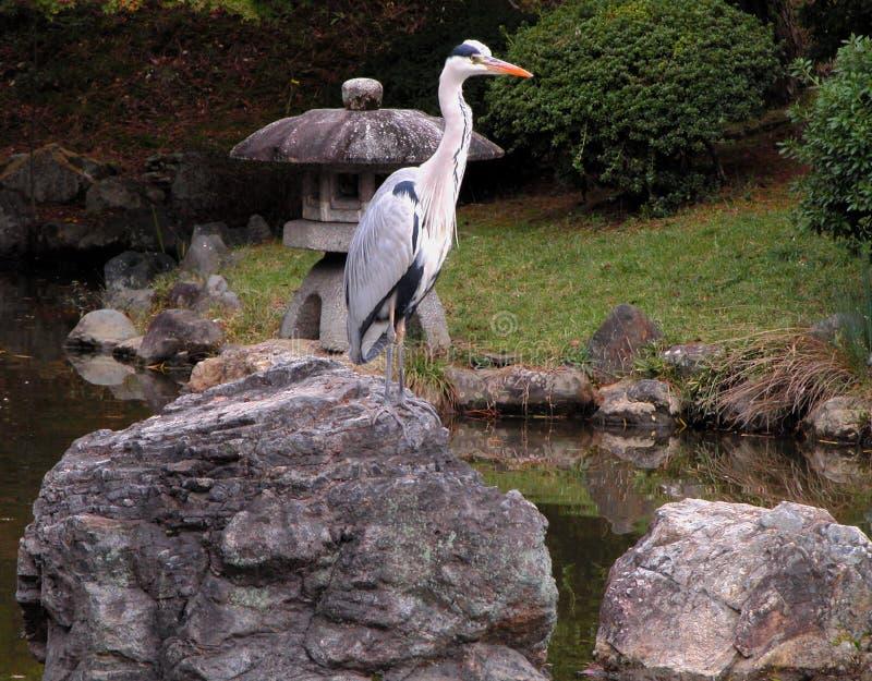 Bird in stone garden stock images