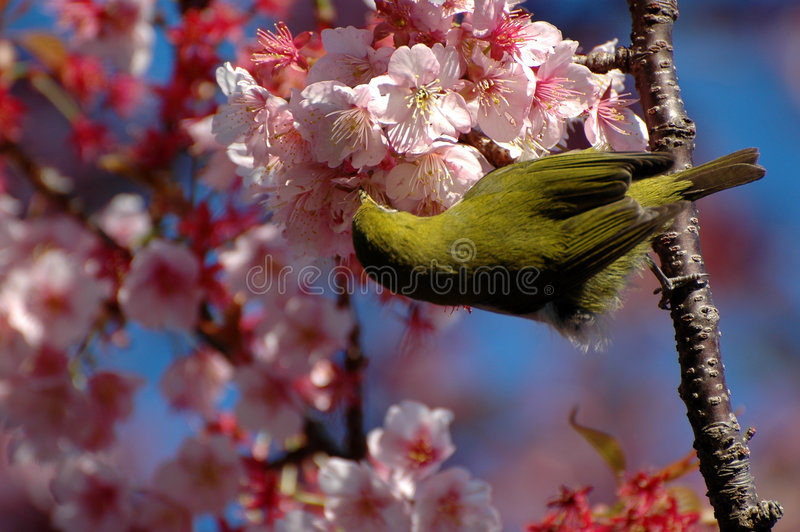 Bird sucking from a flower stock photography