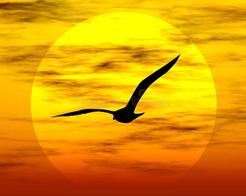 Bird and sun. Sunset. Sunset and bird