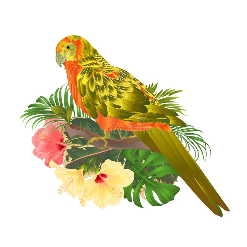 Bird Sun Conure Parrot , home pet , parakeet on a branch bouquet with tropical flowers hibiscus, palm,philodendron on a white bac. Kground vintage vector royalty free illustration