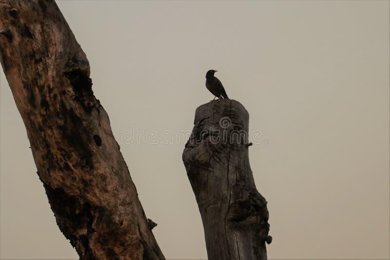 A bird at Sun set stock photos