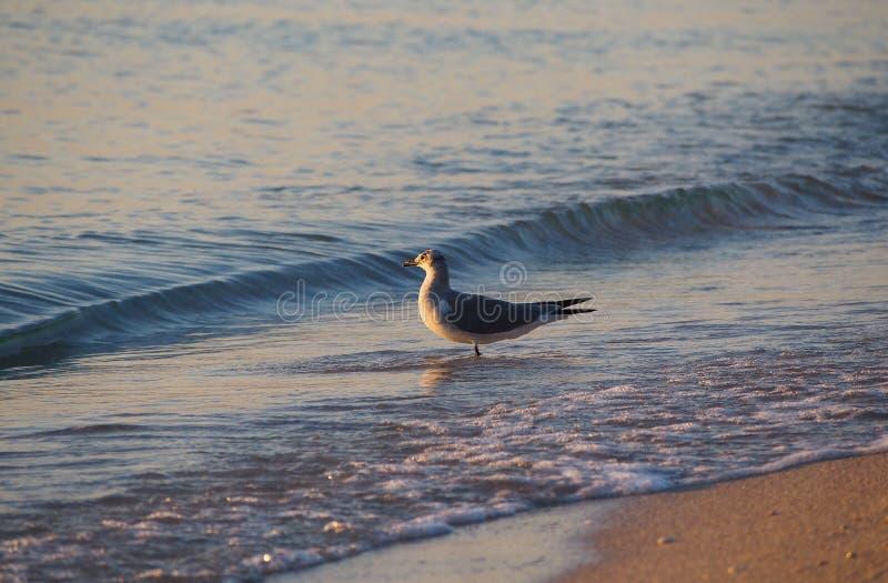 Bird sunbathing stock photos