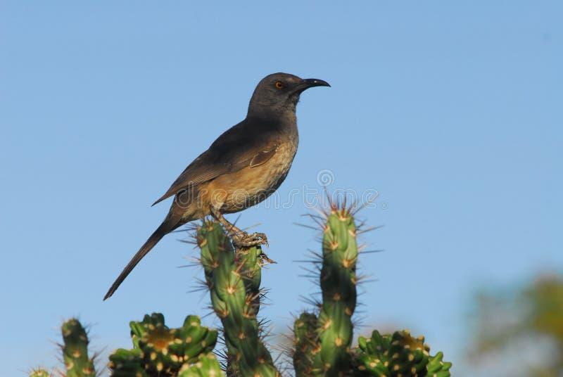 Bird. Taken in albuquerque new mexico royalty free stock photo
