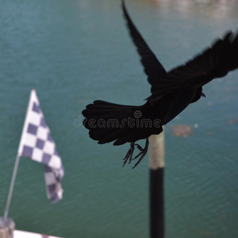 A Bird taking off in port of Miami stock photos