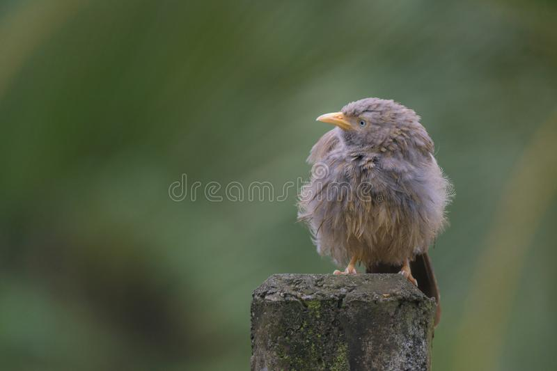Bird on a telephone pole. Small wet bird on a telephone pole looking right side stock photography