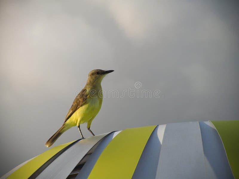 Bird On Tent Free Public Domain Cc0 Image