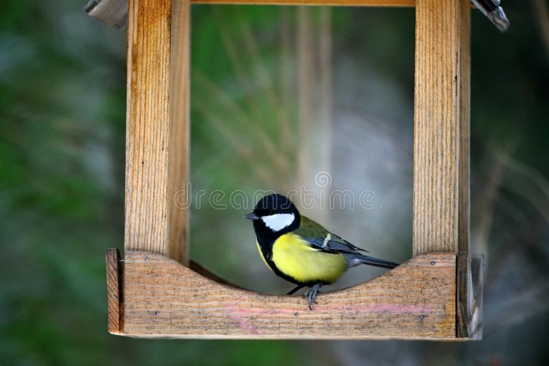 Bird tit on the feeder royalty free stock photography