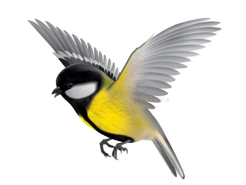 Bird titmouse illustration stock image