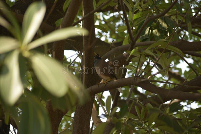 Bird on tower royalty free stock photos