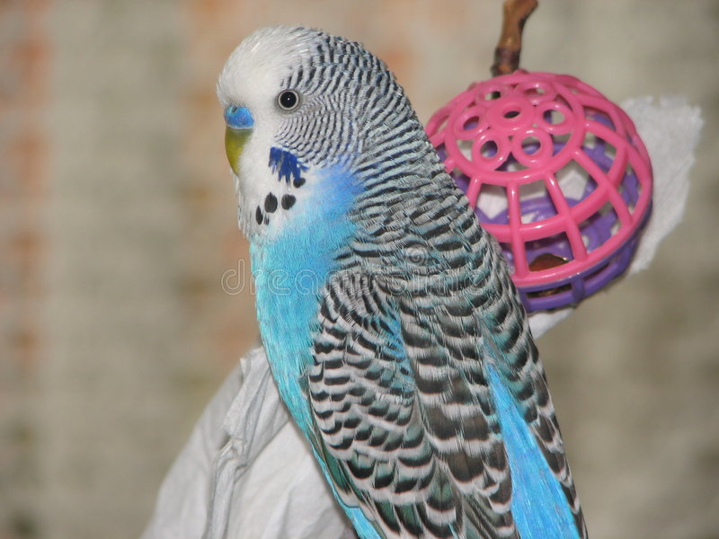 Bird with toy stock images