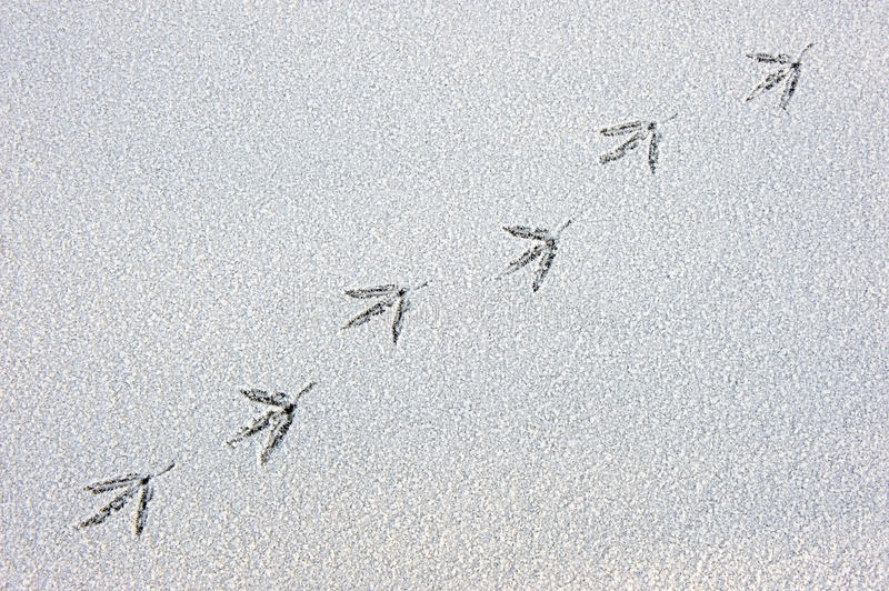 Bird Trail Royalty Free Stock Images