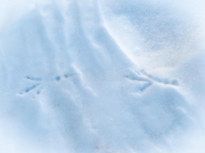 Bird tracks in the snow royalty free stock photography