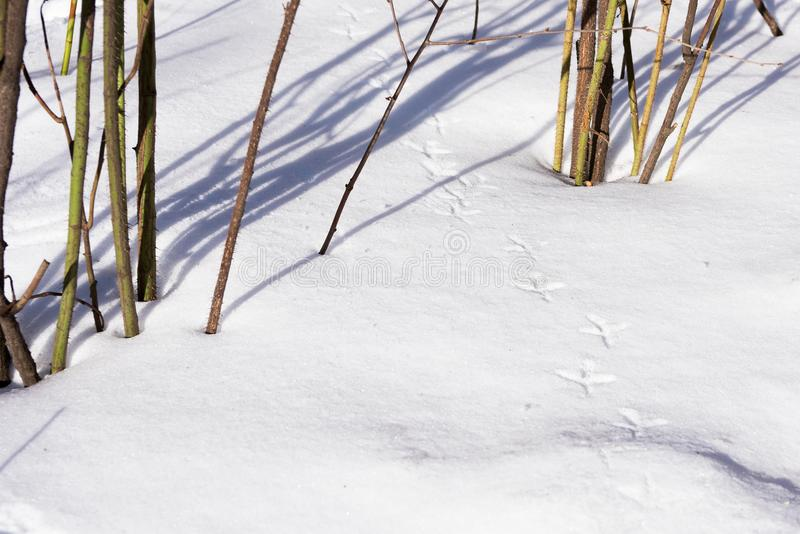 Bird trail on snow in dry grass royalty free stock photos