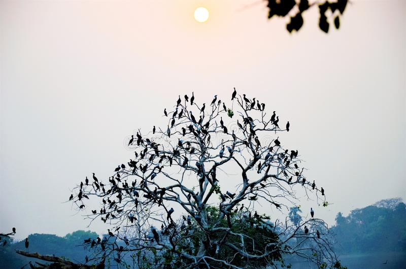 Bird Tree. A tree full of birds, it looks like they are the original leaf of the tree. bird, nature, animal, wildlife, wild, background, white, feather, beak royalty free stock image
