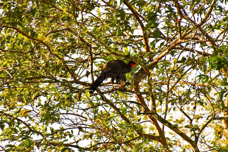 Bird on tree, photo as a background ,taken in Arenal Volcano lake park in Costa rica central america. Bird on tree, photo as a background, digital image stock photography