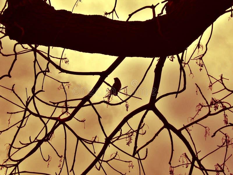 Bird on Tree Silhouette