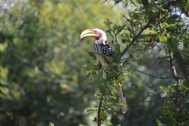 Bird on tree top stock photography
