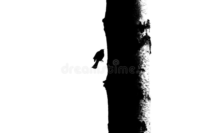 Bird and tree trunk silhouette - 2 royalty free stock photos