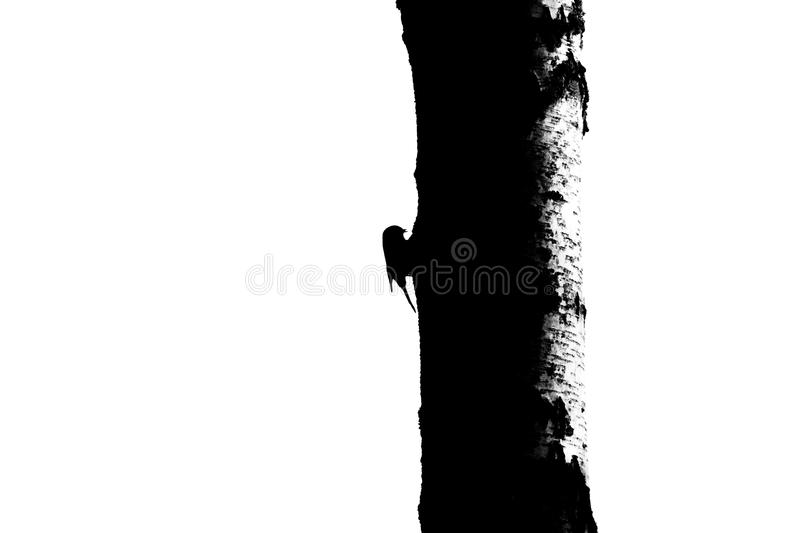 Bird and tree trunk silhouette - 1 stock photography