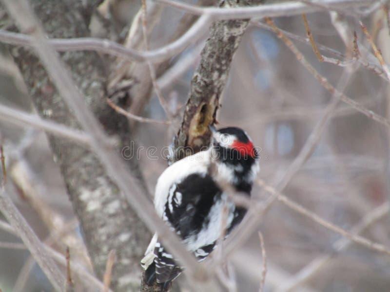 Bird in the tree stock image