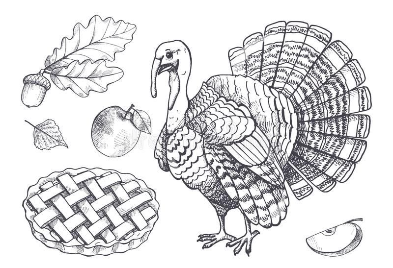 Bird Turkey and Baked Pie Apple Set Icons Vector. Bird turkey and baked pie apple set of isolated monochrome sketches outline vector. Acorn and leaves, fruit and royalty free illustration