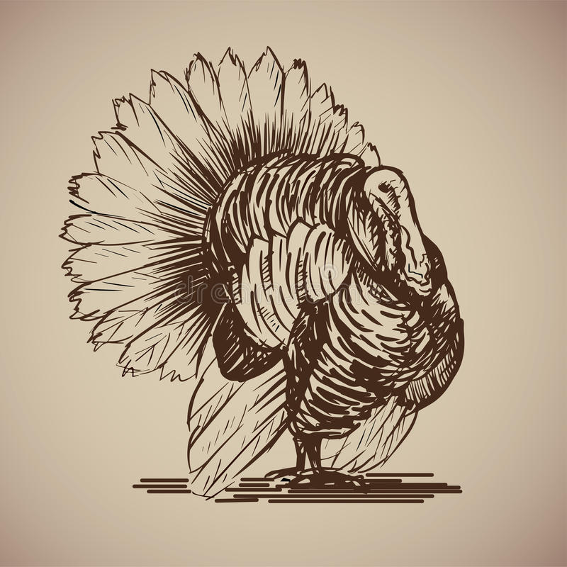 Bird turkey in sketch style. vector illustration