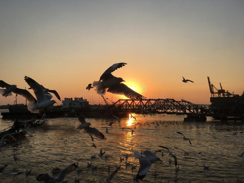 Bird under sun set royalty free stock images