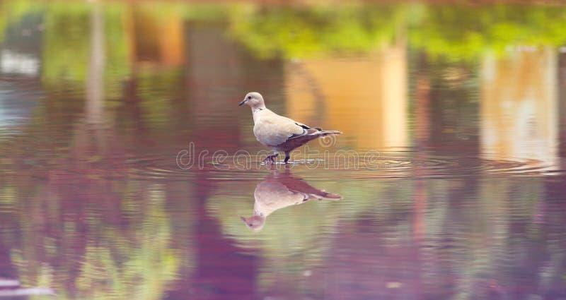 Bird walking after rain royalty free stock image