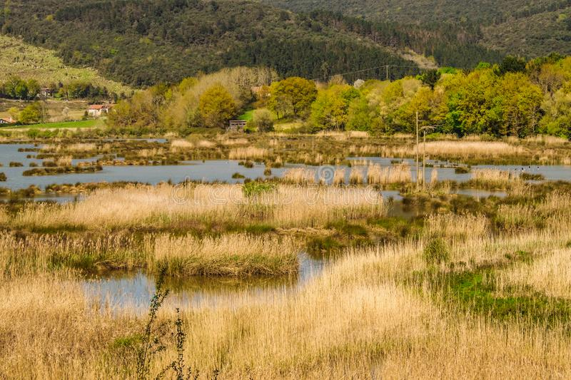 Bird watching in the Bird Center of the biosphere reserve of Urdaibai. Sunny day royalty free stock photos